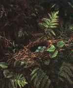 Fidelia Bridges Bird\'s Nest and Ferns oil painting artist