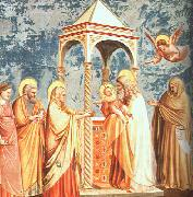 Giotto Scenes from the Life of the Virgin oil painting artist