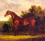 John F Herring Negotiator, the Bay Horse in a Landscape oil painting