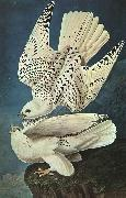 John James Audubon White Gerfalcons Spain oil painting reproduction