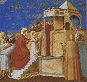 GIOTTO di Bondone Presentation of the Virgin in the Temple oil painting picture wholesale
