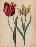 Georg Flegel Two Tulips oil painting picture wholesale
