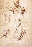 LEONARDO da Vinci The muscles of Thorax and shoulders in a lebnden person oil painting picture wholesale