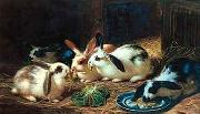 unknow artist Rabbits 116 oil painting reproduction