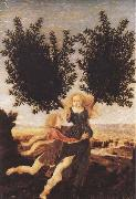 Antonio del Pollaiuolo Apollo and Daphne (mk45) oil painting artist