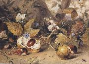 Elizabeth Byrne Still-life with horse chestnuts and insects (mk47) oil painting picture wholesale
