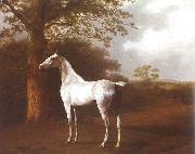 Agasse, Jacques-Laurent White Horse in Pasture oil painting artist