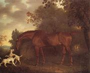 Clifton Tomson A Bay Hunter and Two Hounds in A Wooded Landscape oil painting