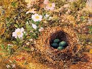 Hill, John William Bird's Nest and Dogroses oil painting artist