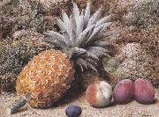 John Sherrin A Pineapple,a Peach and Plums on a mossy Bank (mk37) oil painting picture wholesale