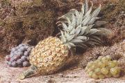John Sherrin A Pineapple and Grapes on a mossy Bank (mk37) oil painting picture wholesale
