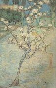 Vincent Van Gogh Blossoming Pear Tree (nn04) oil painting picture wholesale