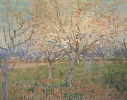 Vincent Van Gogh Orchard with Blossoming Apricot Trees (nn04)_ oil painting picture wholesale