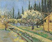 Vincent Van Gogh Orchard in Blossom,Bordered by Cypresses (nn04) oil painting picture wholesale