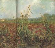 Vincent Van Gogh Green Ears of Wheat (nn04) oil painting picture wholesale