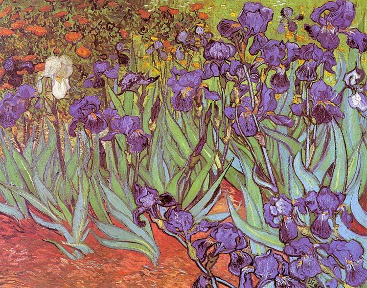 Vincent Van Gogh Irises oil painting image