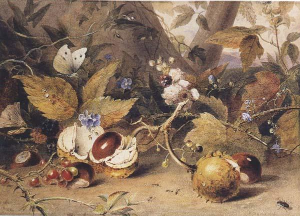 Elizabeth Byrne Still-life with horse chestnuts and insects (mk47) oil painting image