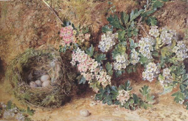 William Henry Hunt,OWS Chaffinch Nest and  May Blossom (mk46) oil painting image